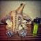Купить Слоник, Слоники, Зверята, Куклы и игрушки ручной работы. Мастер Ольга Павлова (Rukodelniza) .