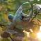Купить Заяц Красавчик, Зайцы, Зверята, Куклы и игрушки ручной работы. Мастер Настя Соболева (soblya) . заяц