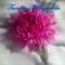Купить Астра, Текстильные, Броши, Украшения ручной работы. Мастер Галина Шелудкова (Galka2014) . цветы из шелка